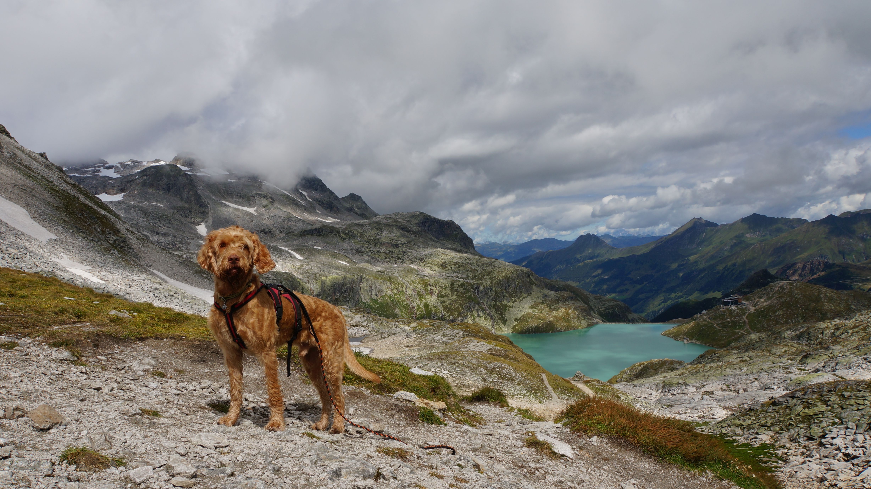 actieve vakantie met hond